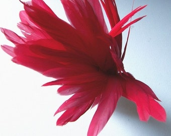 Red Rooster Tail Feathers, 8 to 10 Inches Long, 6 Pcs