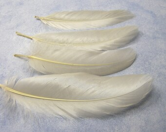 13 IVORY Cream Satinette Goose Feathers