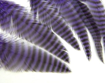 8 Purple Grizzly Magnum Feathers 3 to 5 Inches Long