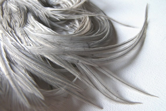 10 SILVERY GRAY Feathers 3-5 Inches Long
