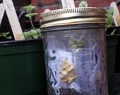 Over 300 Edibles Seeds, 24 Varieties, Urban Homestead Garden Seed Kit