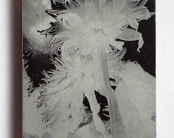 Metal photo art black and white flower, 5x7