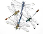 Dragonfly quartet