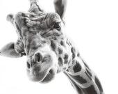 happy giraffe, 8x10 black and white photograph