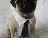Pug or Small Dog Dress Shirt and Tie Set for small dogs