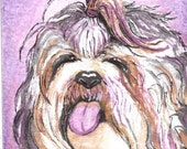 SHIH-TZU DOG  Portrait