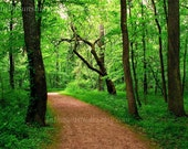 Path Well Traveled