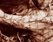 Metamorphosis - Digital Print - Limited Edition, 7\/50