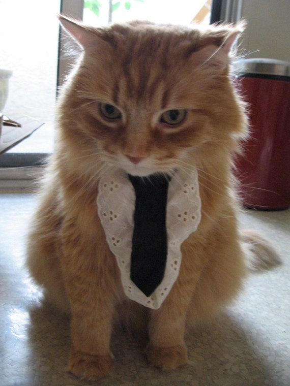 Cat ties (they work for small dogs too I guess)