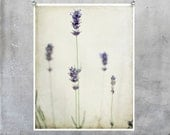 Flower Photography - shabby chic country style lavender flowers - 10x8 11x14 16x20 20x30 fine art photography  print wall art home decor. - EyeshootPhotography
