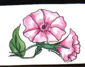 Watercolor Print -Morning Glory with BONUS Seeds