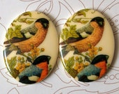 2 Wonderful Large Vintage Bird Decal Cabochons Series 5 40x30