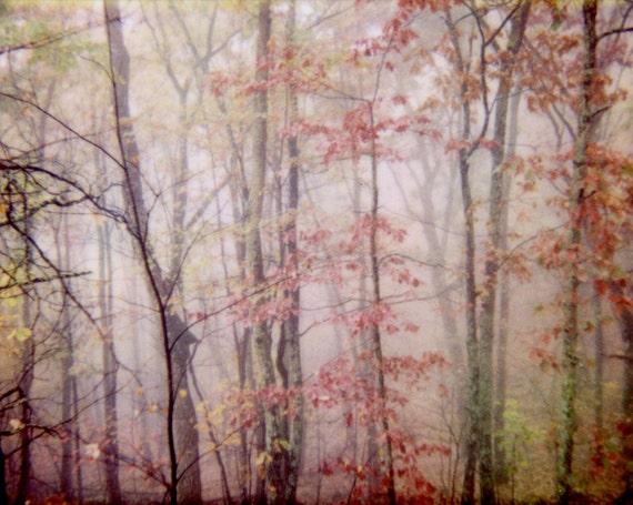 Pink Fog, 8x10 photograph