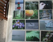 Alaska Photo Postcard Set \/  12 Prints \/ Original Photography