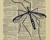 Mosquito Vintage Insect printed on an old Dictionary Page