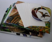 Recycled Dinosaur stationery- set of 8