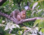 oh boy yummy pecans, this squirrel is sure enjoying them
