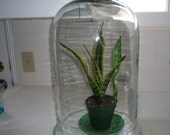 Extra Large Bell Jar 9.8 inches wide and 16.3 inches tall