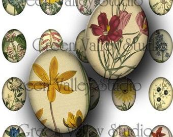 INSTANT DOWNLOAD Digital Collage Sheet Vintage Flowers Illustrations Botanicals Plants Medium Ovals 18 x 25 mm for Pendants (O9)