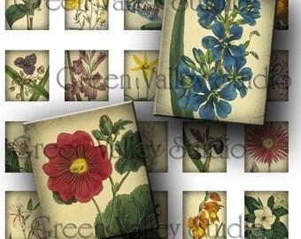 INSTANT DOWNLOAD Digital Collage Sheet Vintage Botanical Illustrations Plants Flowers .75 x .873 Inch for Scrabble Tile Pendants (S58)