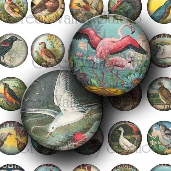 INSTANT DOWNLOAD Vintage Birds Digital Images Collage Sheet Ducks Flamingo Crows One Inch Circles for Pendants Magnets Crafts (C84)