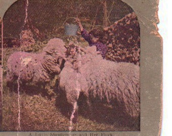 Vintage Stereoview Card: A Little Shepherdess and Her Flock- An1