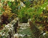 The Green Stairway - 8x10 Framed Fine Art Print