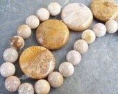 FOSSIL CORAL bead set, rounds and flat round tablets