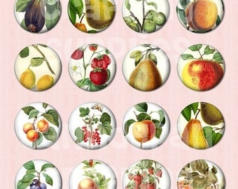 24 Fruit Flat back Buttons
