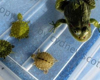 photo of frog, photo of turtles, fine art photo, photography, mature photography, frog photo, turtle photo, turtle print, frog print