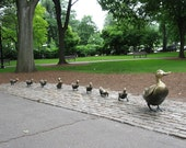 Photo Note Card - Make Way Boston Public Garden ducklings statuary 5x7 inches