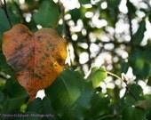 Heart Leaf 8x10 Print