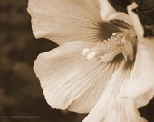 Flower 8x10 Print