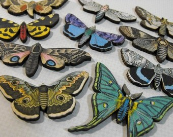 Vintage Small Moths