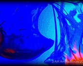 Blue Abstract Jellyfish Photography 8x10 Boston Aquarium