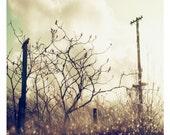 archival pro photo print, nature fine art - Fused rain drops