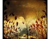 Autumn Metallic Pro Lab Nature Print, Symphony Of Autumn - nature's warm fall colors