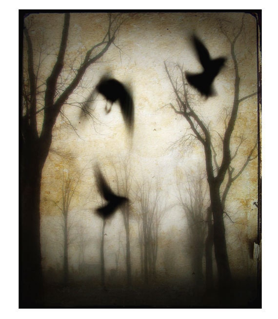 Gothic Crows and Trees photograph - At dusk -  Surreal art-Photo