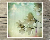 Flower Art Print, Dreaming, 5x5 Inch Print