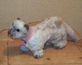 Adorable standing ferret