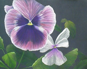 """Original Colored Pencil Art Painting """"Pansy Profusion"""""""