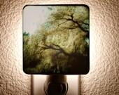 Willow Night Light