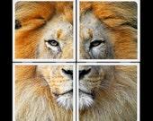 AramsEyes-King of the Jungle-Ceramic Coasters Set