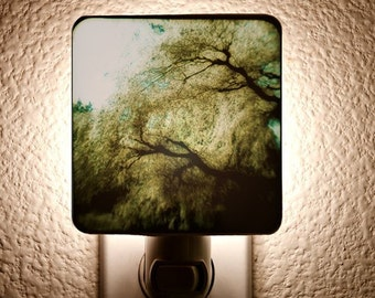 Willow Night Light