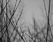 Bare - 8x10 Metallic Black and White Photograph - Winter Branches - Dark and Moody Nature Art - IN STOCK