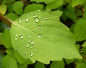 Balance - 8x10 Nature Photo - Green Leaf with Water Droplets - IN STOCK