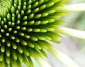 Touch - 5x7 Flower Photography - Fine Art Print - Coneflower Abstract Art in Lime Green - IN STOCK