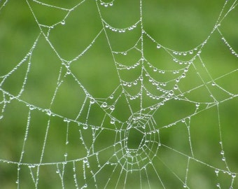 Beaded - 8x10 Photographic Print - Nature Photo - Spider Web with Water Droplets