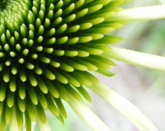 Touch - Abstract Art Photograph - Lime Green Coneflower Print - 4x6, 5x7, 8x10, 11x14, 16x20