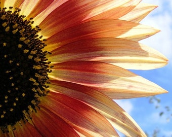 Halved - Sunflower Blank Photo Note Card - IN STOCK